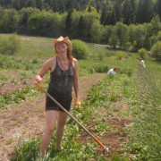Rosie helping to hoe the potato fields.