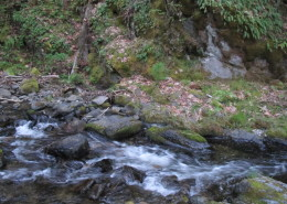 Fresh water running through our land