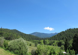 Summer greenery and the Siskiyou mountains.