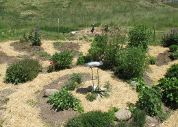 One of the organic gardens at Full Bloom Community