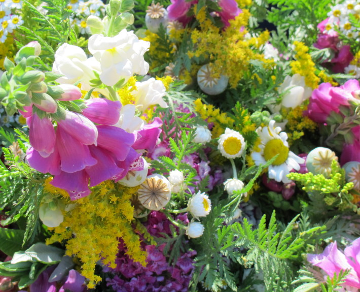 Fresh flowers going into the Siskiyou sustainable cooperative veg boxes.
