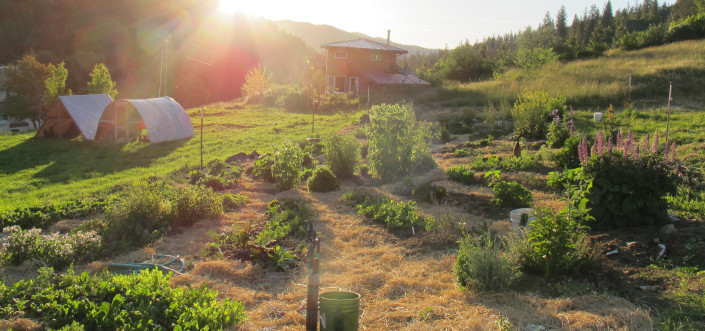 A shot of the land at Full Bloom Community. Permaculture principles are used when designing gardens.